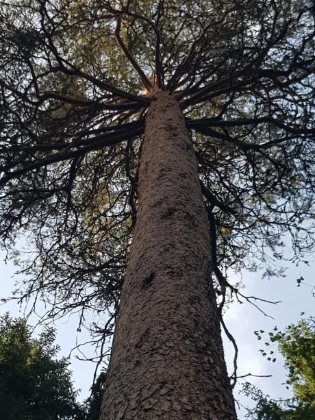Metsässä löytyy myös kookkaita puita