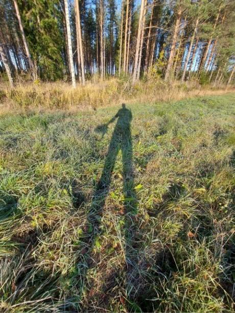 Ratamestari auringossa